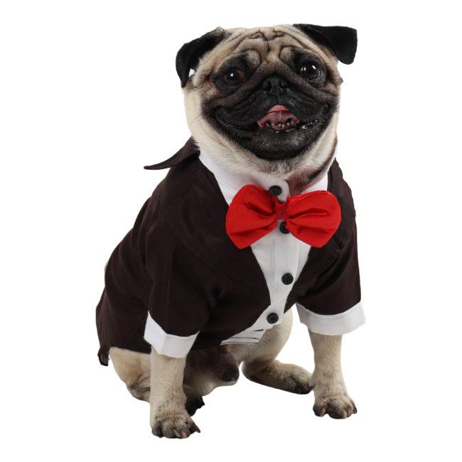Dog Tuxedo (Party Tuxedo for Dogs (brown color))