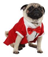 Dog Tuxedo (Party Tuxedo for Dogs (red))