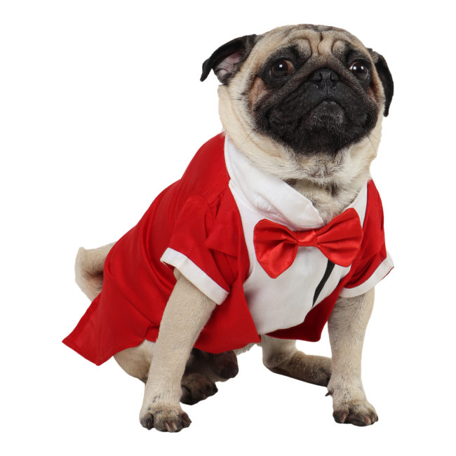 Dog Tuxedo (Party Tuxedo for Dogs (red))