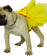 dog & puppy clothes, outfits & apparel