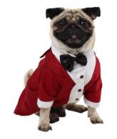 Dog Tuxedo (Party Tuxedo for Dogs( maroon color))
