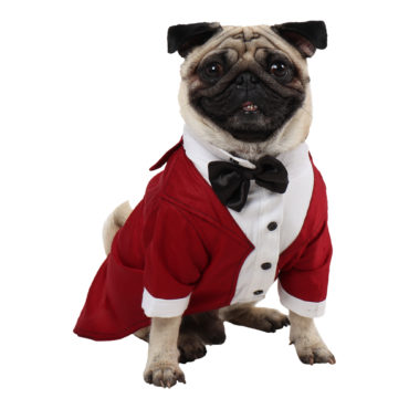 Dog Tuxedo (Party Tuxedo for Dogs( maroon color))