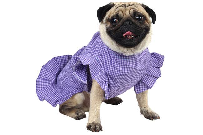 douge couturel dog/cat smart purple check dress(back to school)