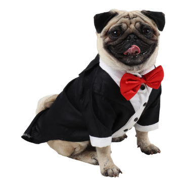 Dog Tuxedo (Party Tuxedo for Dogs (black color))
