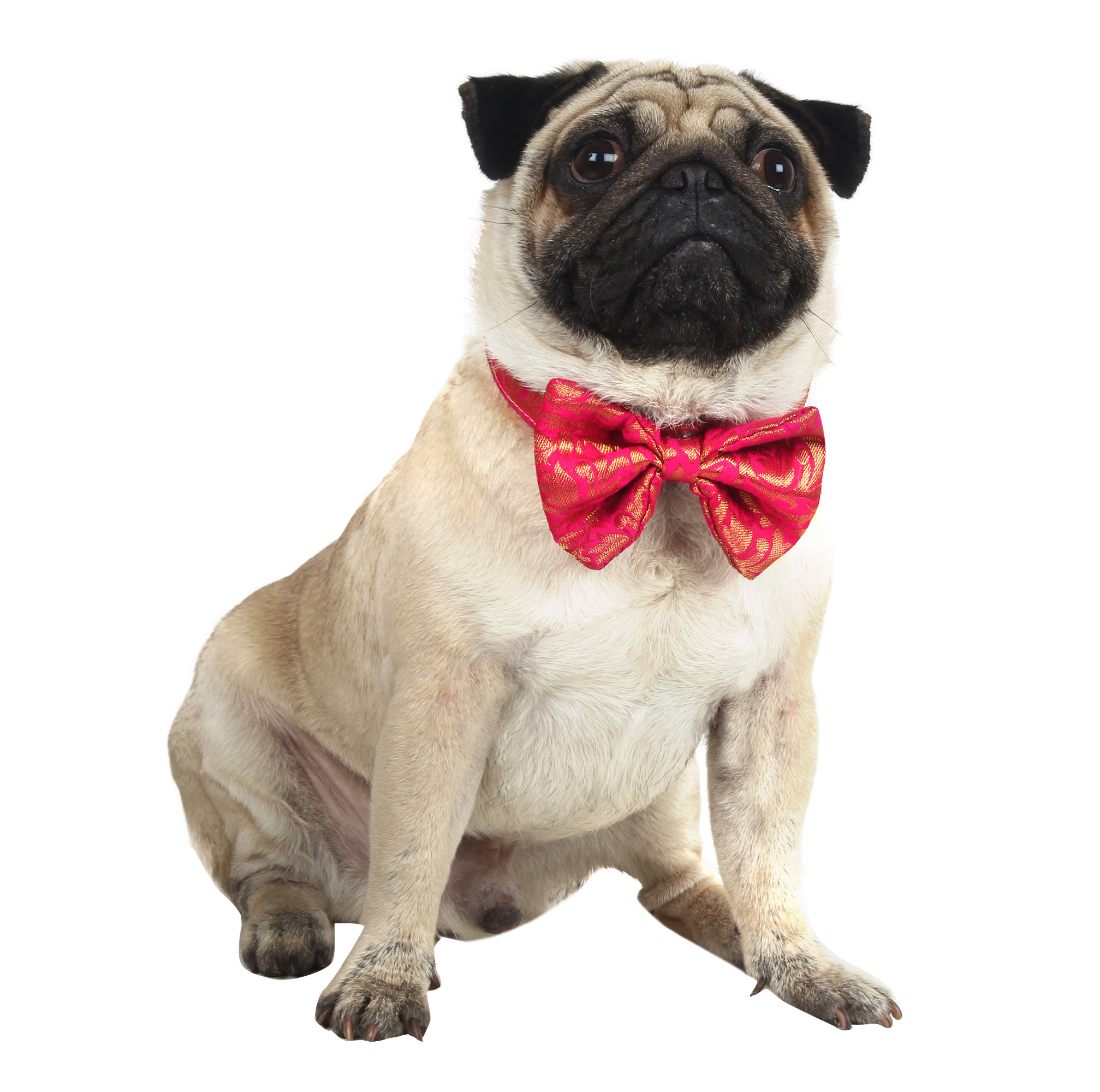 Douge Couture Do/catg Bow Tie Sherwani Collar for Wedding/Diwali/Festival Dog Bowtie pink color