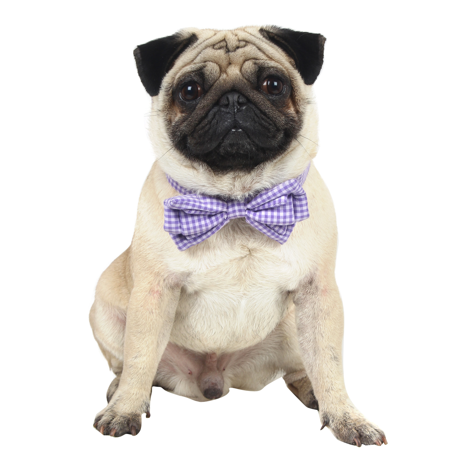 Douge Couture smart check bow collar for dog/cats purple color check