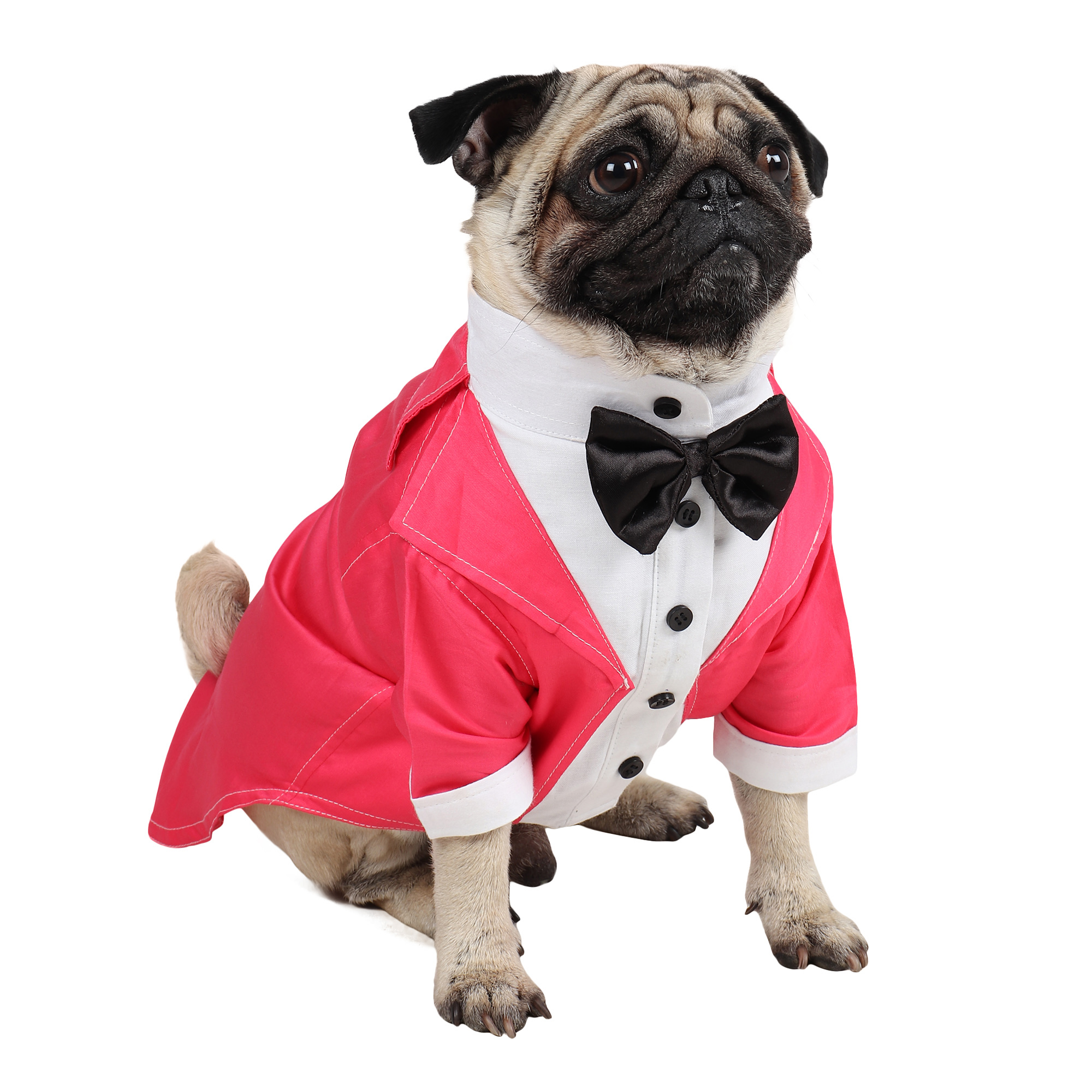 Dog Tuxedo (Party Tuxedo for Dogs (pink))