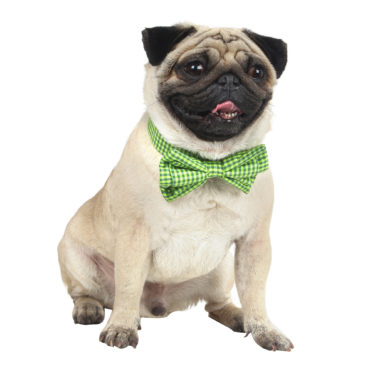 Douge Couture smart check bow collar for dog/cats green color check 1