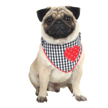 Douge Couture Love Bandana for dog/cat blackcheck 1