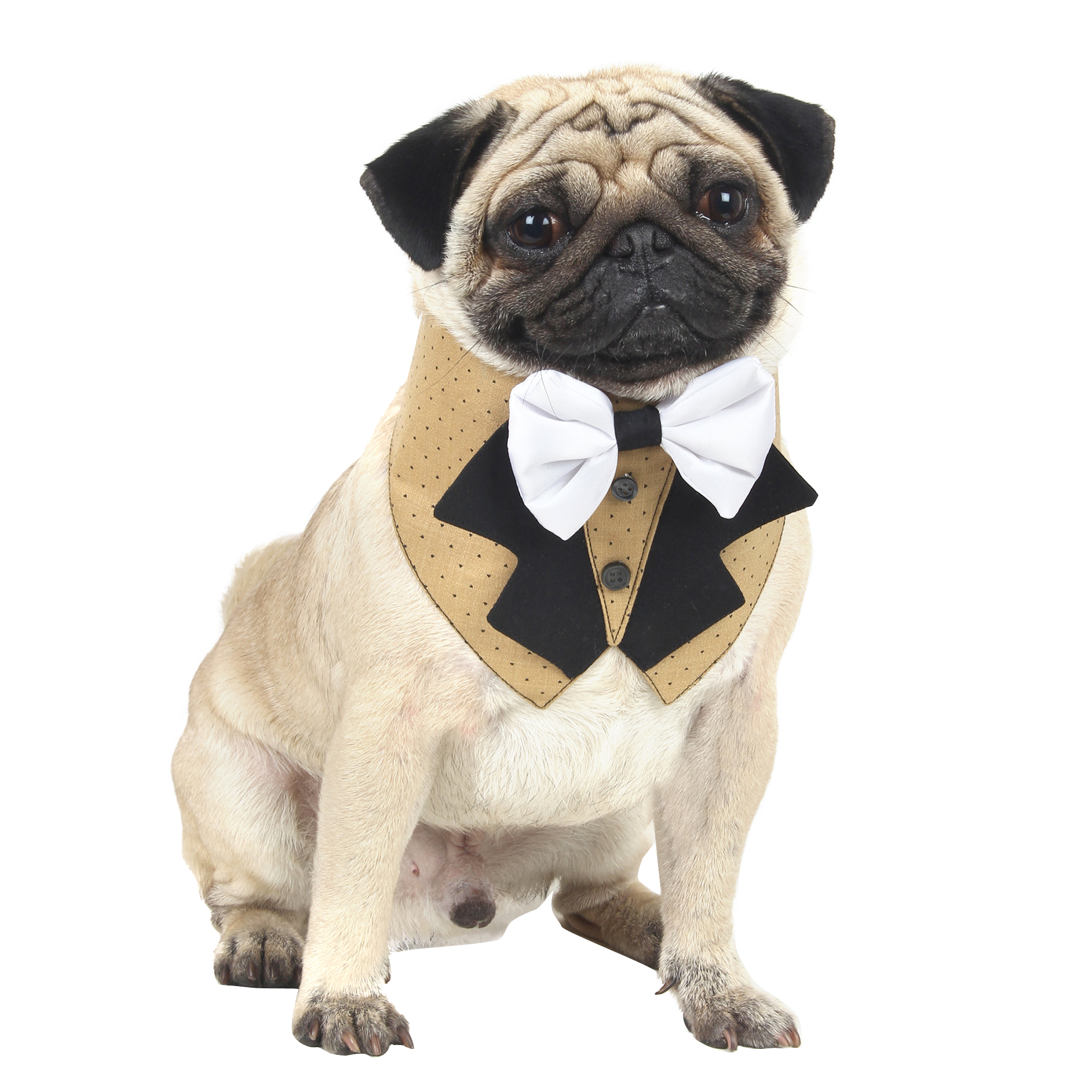 Douge Couture Tuxedo tie for dogs/cats