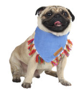 Douge couture bandana for dogs/cat blue color