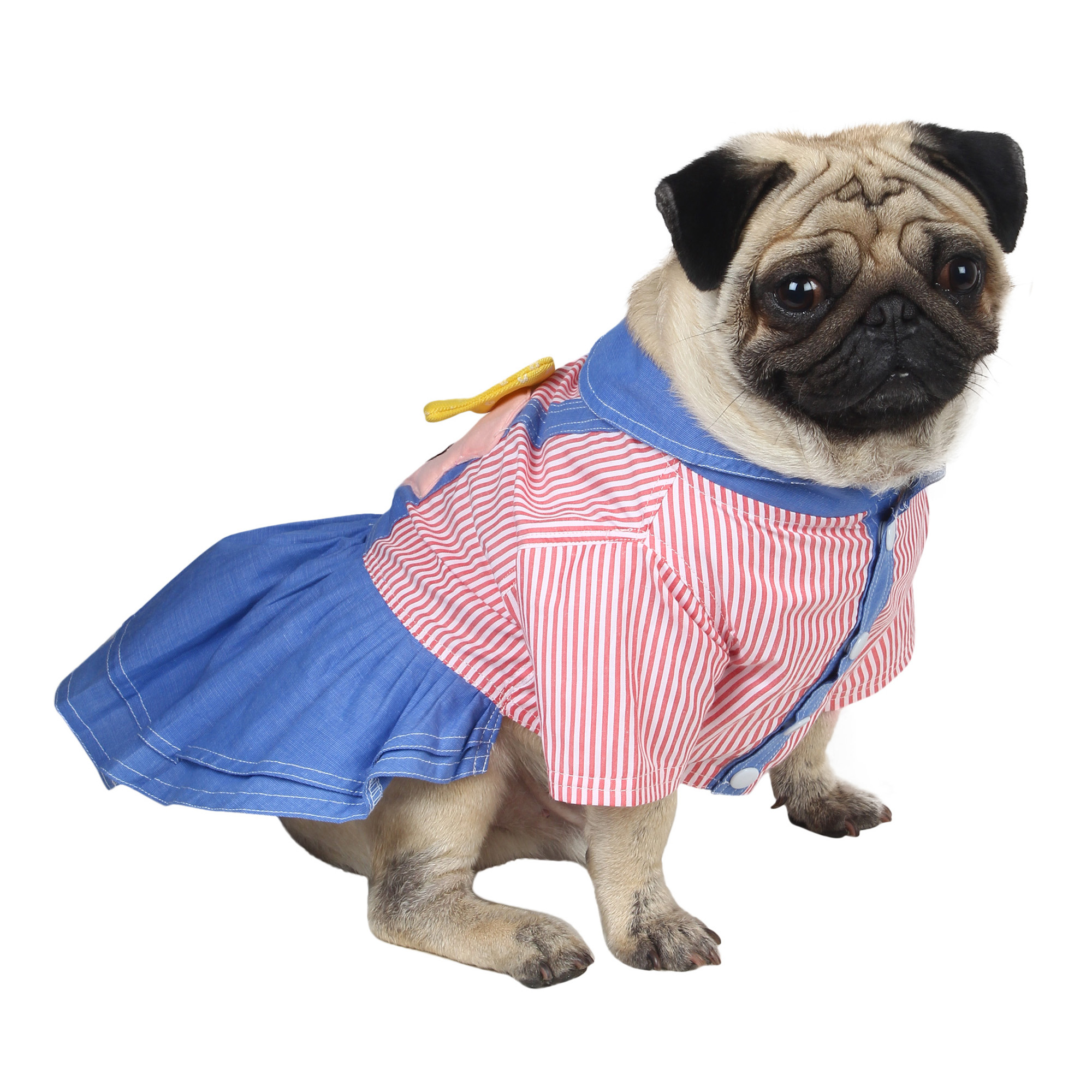 douge coutre cute doll dress dog/cat