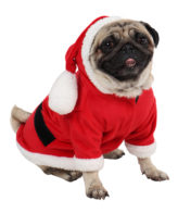 Dog Clothes Christmas Santa Dress (Red)