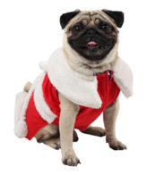 Dog Clothes Christmas Dress (Red)