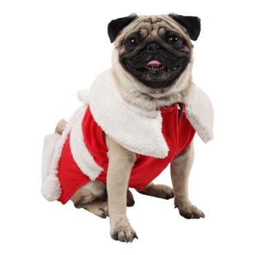 douge couture Christmas Dog Clothes, Santa female Dog Costume Winter Pet Coats, Color : Red 1
