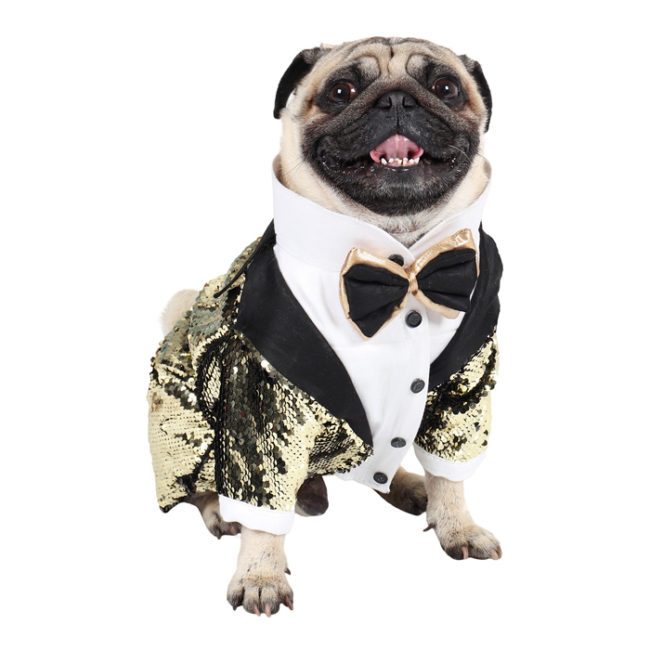 Dog Tuxedo (Elegant Glamour Party Tuxedo for Dogs (black and golden))