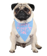 douge couture printed flower pup bandana (sm-ml sizes)