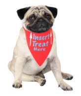 douge couture printed insert treat here red bandana (sm-ml sizes) (Copy)