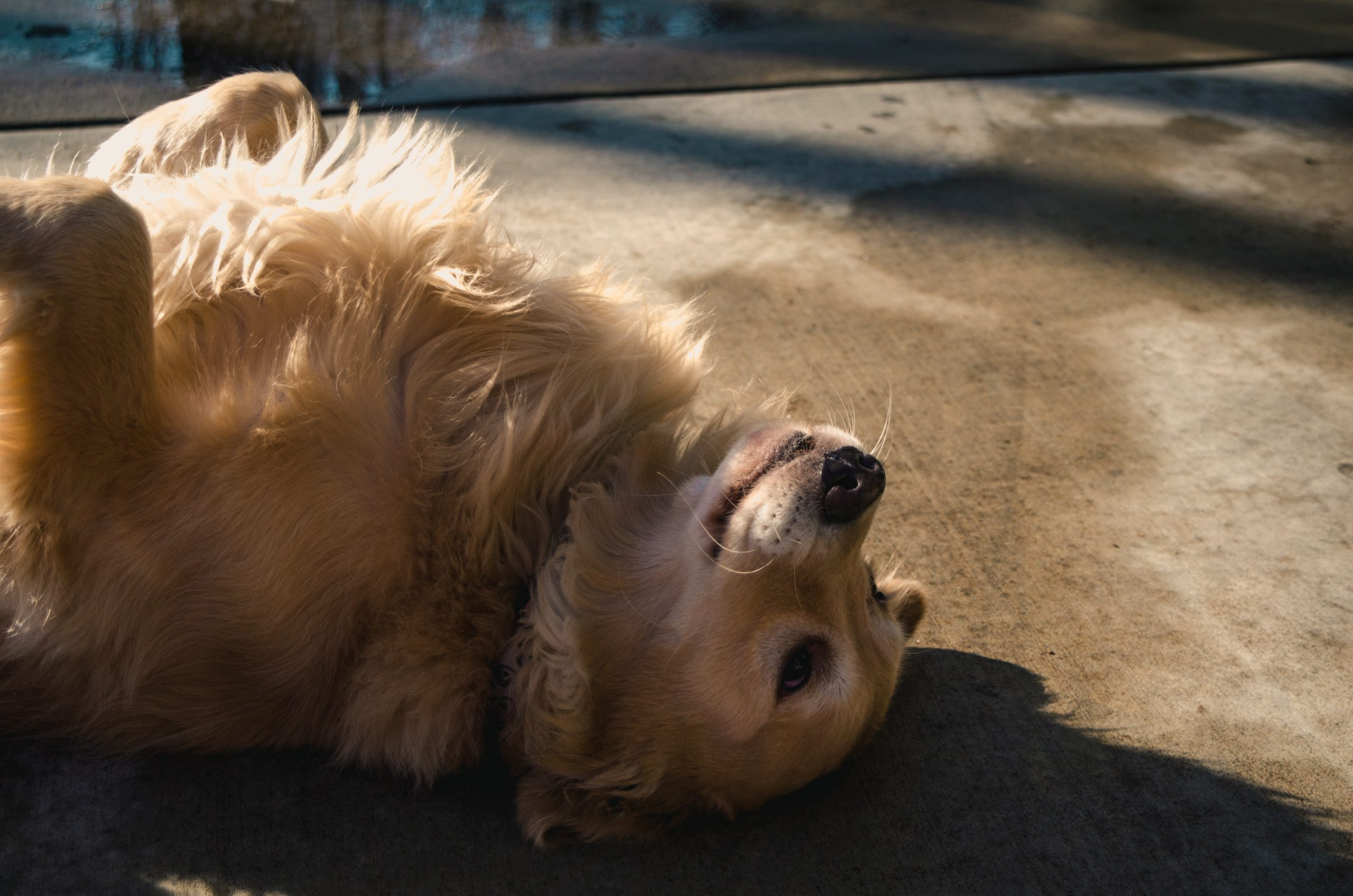 6 Outdoor Exercises For Senior Dogs