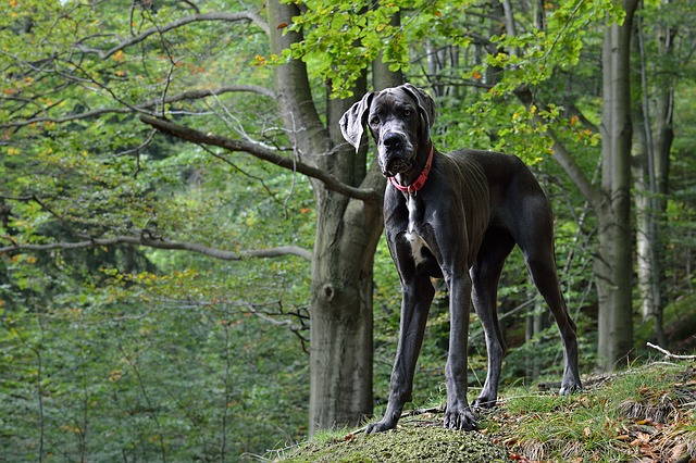 top 5 Dog breeds in india