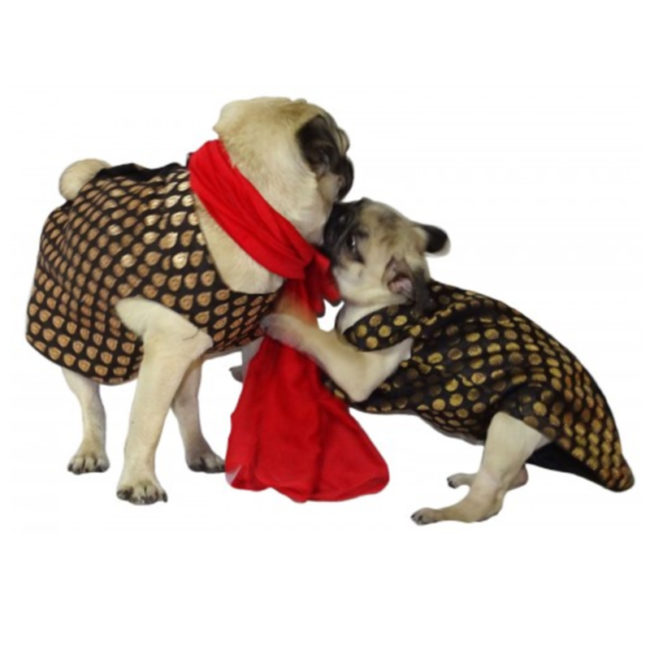 Douge Couture Sherwani for Dogs, Black