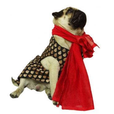 Dog Tuxedo( Sherwani for Dogs, Black)