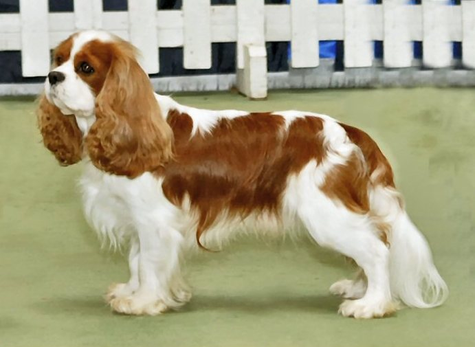 Top 9 'Low Maintenance' Dog Breeds