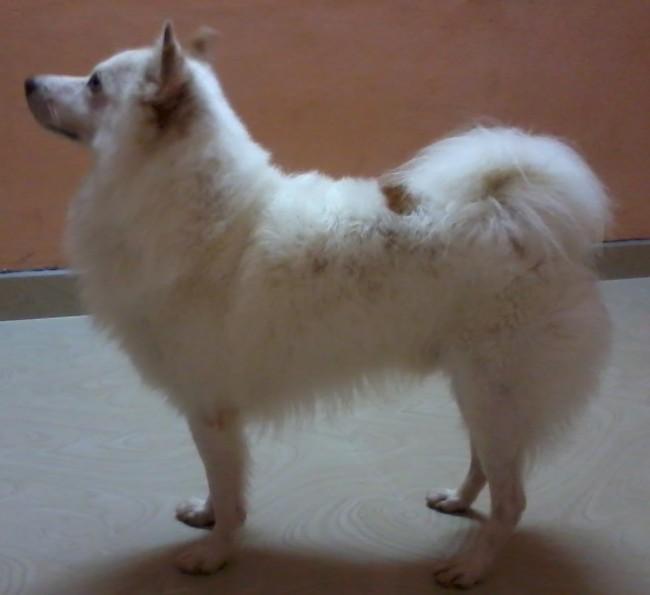best puppy In india