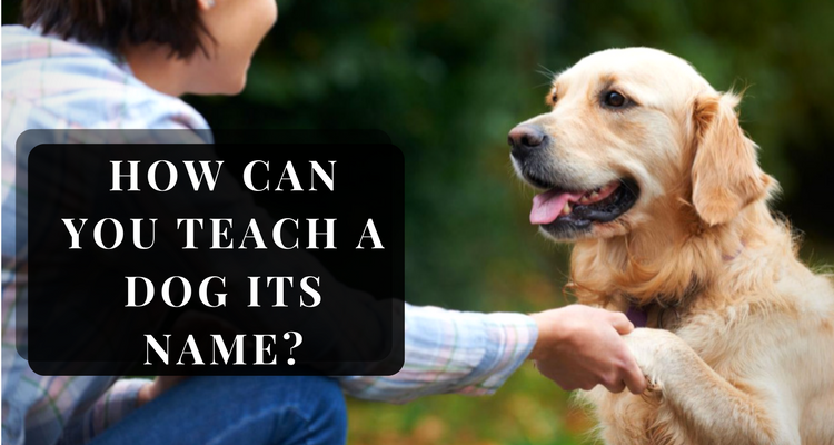 How Can You Teach A Dog Its Name?