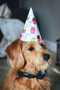 10 Fun Ways to Celebrate Your Dog's Birthday