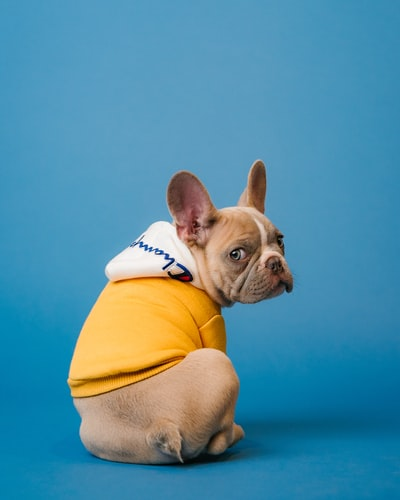 Brand Feature: Gooby Pet Fashions