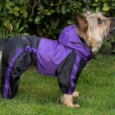 dog-raincoat-with-legs-underbelly-purple-yorkshire-terrier-standing-treat-your-dog